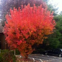 Eagle Bay Condominium / photo 4 elaine red tree